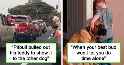 30 Wholesome Dog Posts That Will Immediately Make Your Day Better