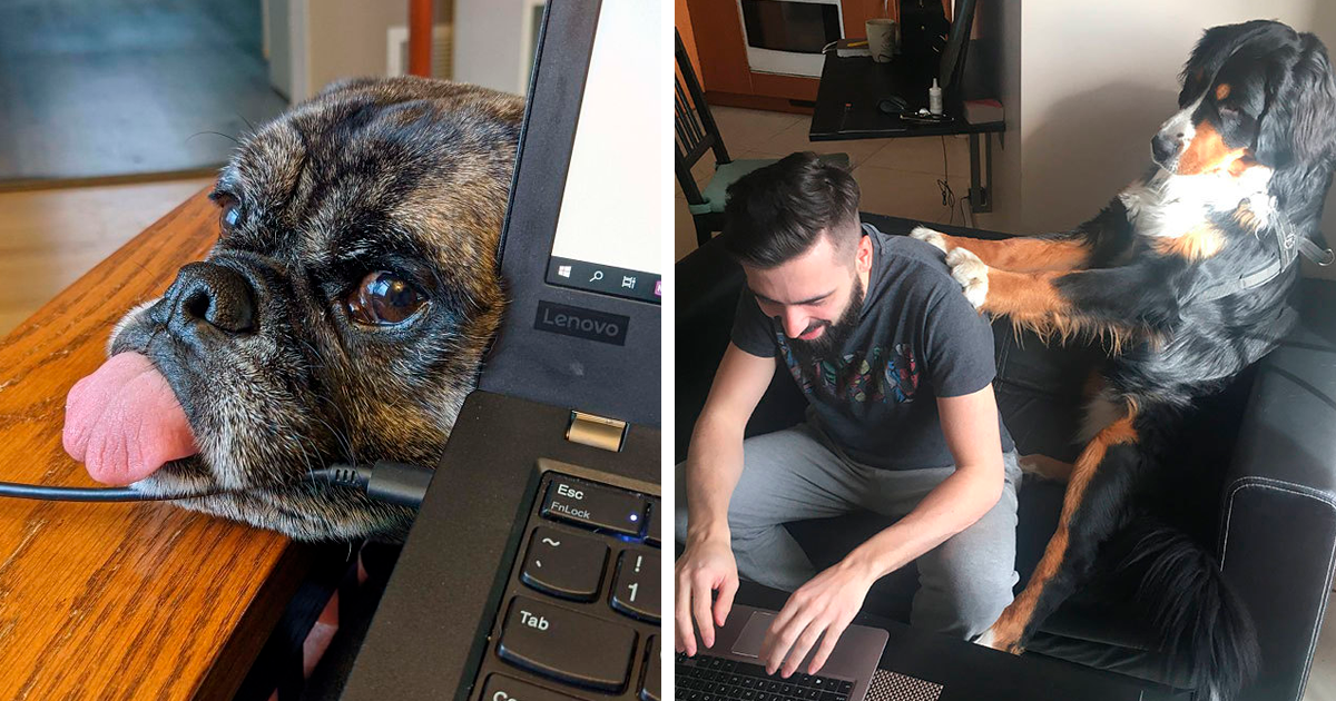 30 Employees Share How Their Pets Deal With Them Working From Home