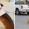 This Quarantined Guy Sent His Dog On A Mission To Purchase Cheetos And He Delivered