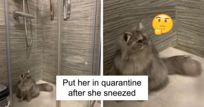 30 Of The Cutest Quarantine Cats That Will Make Your Boring Day Better
