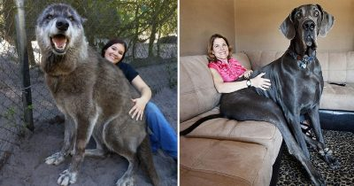 32 People Share Pics Of Their Dogs, And It's Crazy How Big They Are