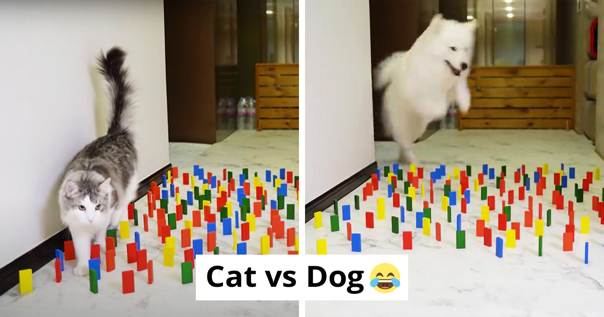 This Viral Video Shows How Differently Cats And Dogs Deal With Obstacles