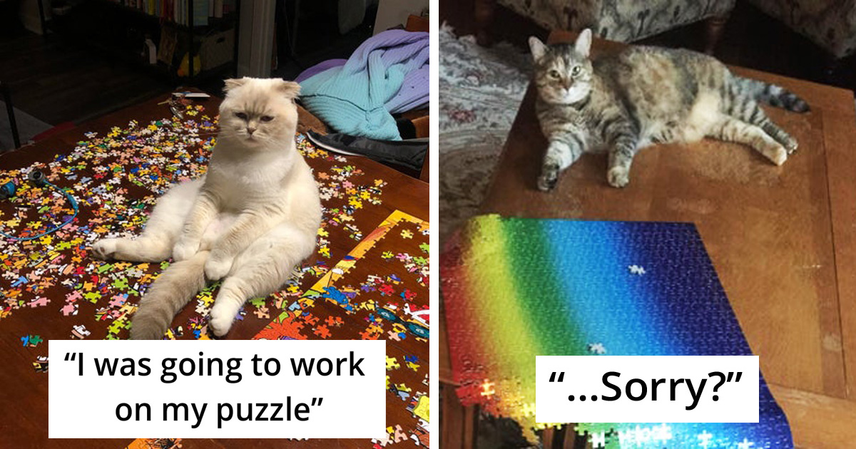 25 People Share The Hilarious Reality Of Finishing Puzzle With Their Cats