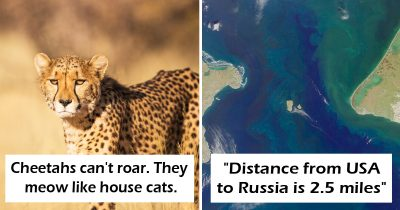 30 Interesting Facts That Sound False But Are Actually 100% True