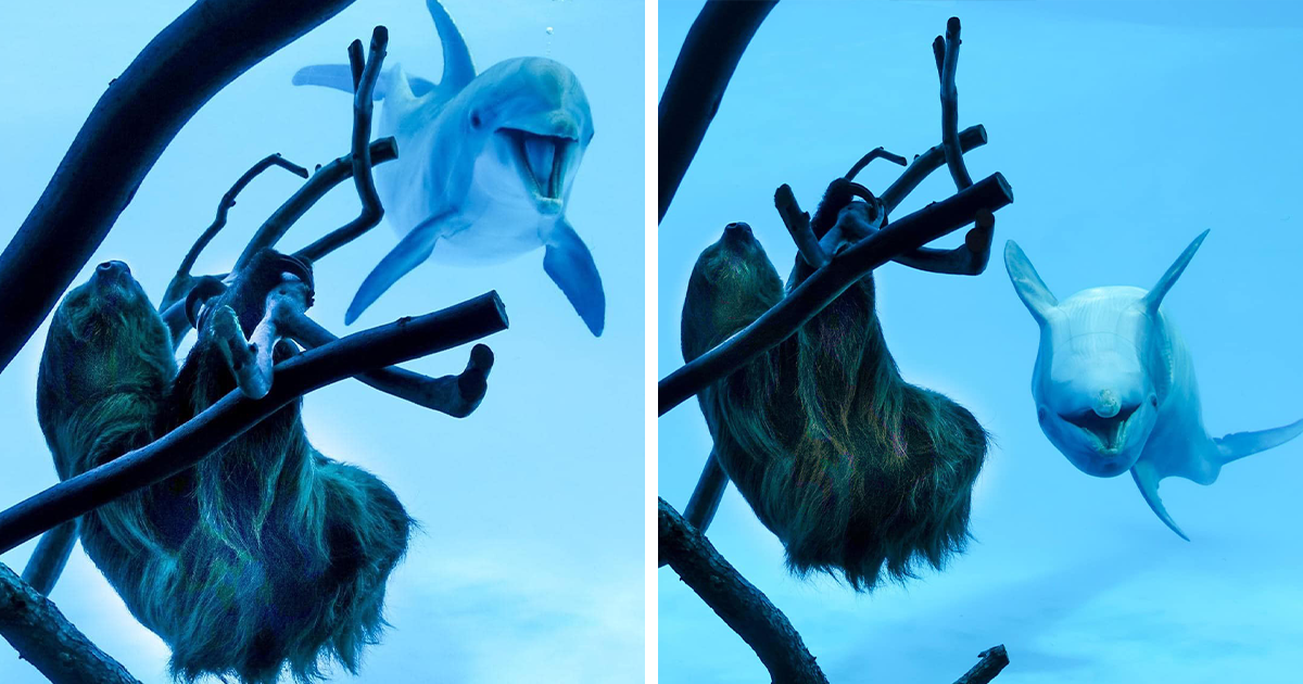 These Dolphins Went Crazy With Excitement At The Sight Of A Sloth