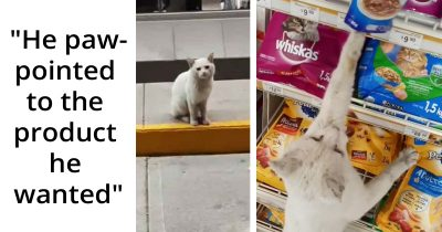 Intelligent Stray Cat Led A Woman To A Grocery Store And Asked Her To Buy Him Food, She Adopted Him