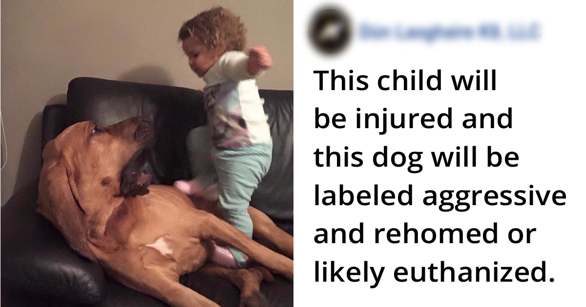 People Fed Up With Others Who Let Their Kids Mistreat Pets Explain How Stupid And Dangerous It Is