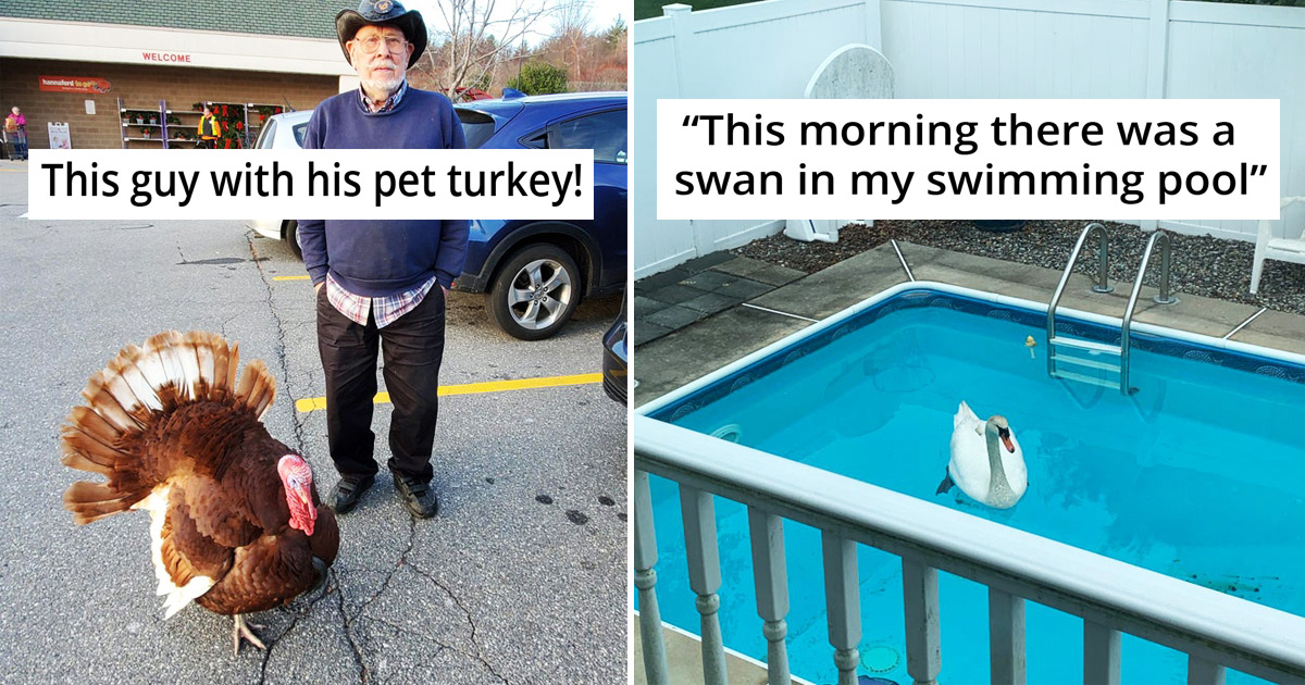 28 People Who Are Absolutely Living Their Best Life The Way They Want