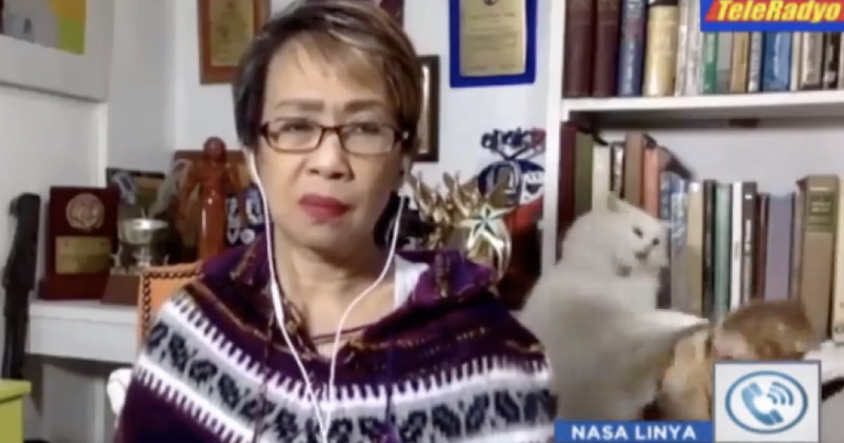 Woman Maintains Her Calm As Cat Brawl Erupts Amid A Live Broadcast And It Goes Viral