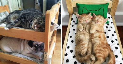 People Are Buying IKEA's Doll-Beds And Using Them For Their Cats