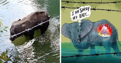 Artists Pay Tribute To The Pregnant Elephant Who Died After Eating Firecracker-Stuffed Pineapple Traps