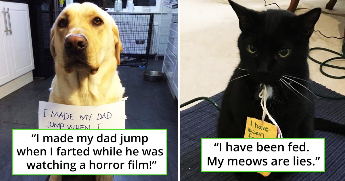 30 Hilarious Pets That Got Shamed From Owners For Their Funny Mistakes