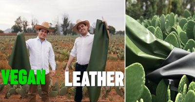 Two Mexican Guys Found A Method Of Turning Cactus Into Leather That Looks & Feels Like Real