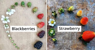 20 People Share Pics Of The Life Cycles Of Living Things