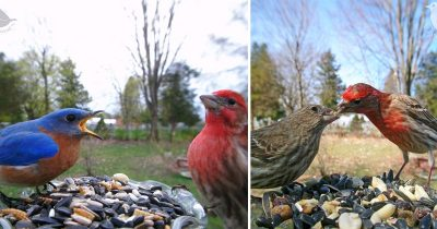 Woman Installs A Feeder Cam For Birds In Her Yard And Captured Incredible Pics