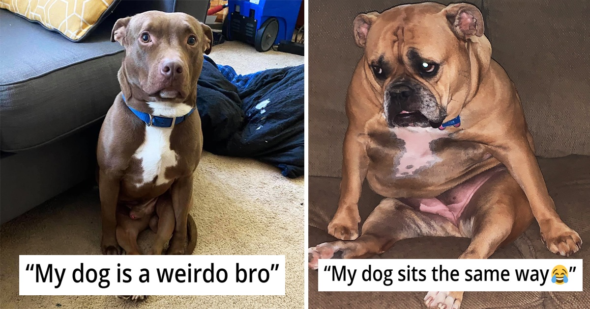28 Pet Owners Share Hilariously Weirdest Ways Their Dogs Are Sitting