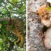 30 Hilarious Cats Who Have The Intricate Art Of Sleeping In Trees