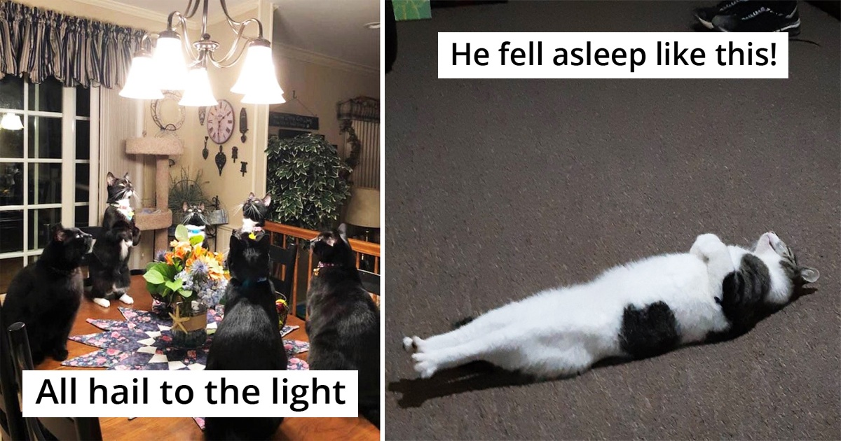 People Are Sharing Their Malfunctioning Cats' Pics In This Group And Here're 25 Hilarious Ones