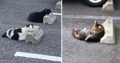 10 People Share Pics Of Cats Using Parking Bumpers As Pillows And It's Hilarious