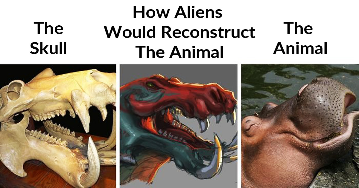 23 Pics Show How Aliens Would Reconstruct Animals Based On Their Skulls Vs. What They Actually Look Like