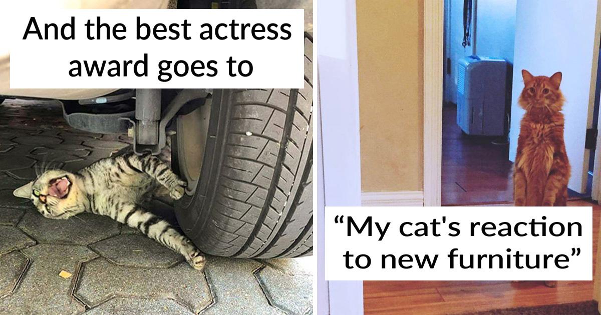 30 Feline Drama Queens That Deserve An Oscar