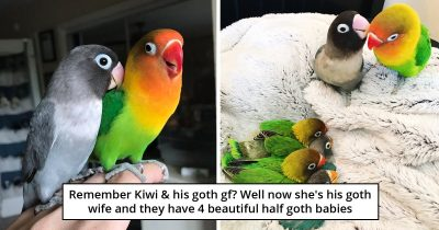 30 Hilarious Times Birds Steal The Internet's Attention For Being Birds