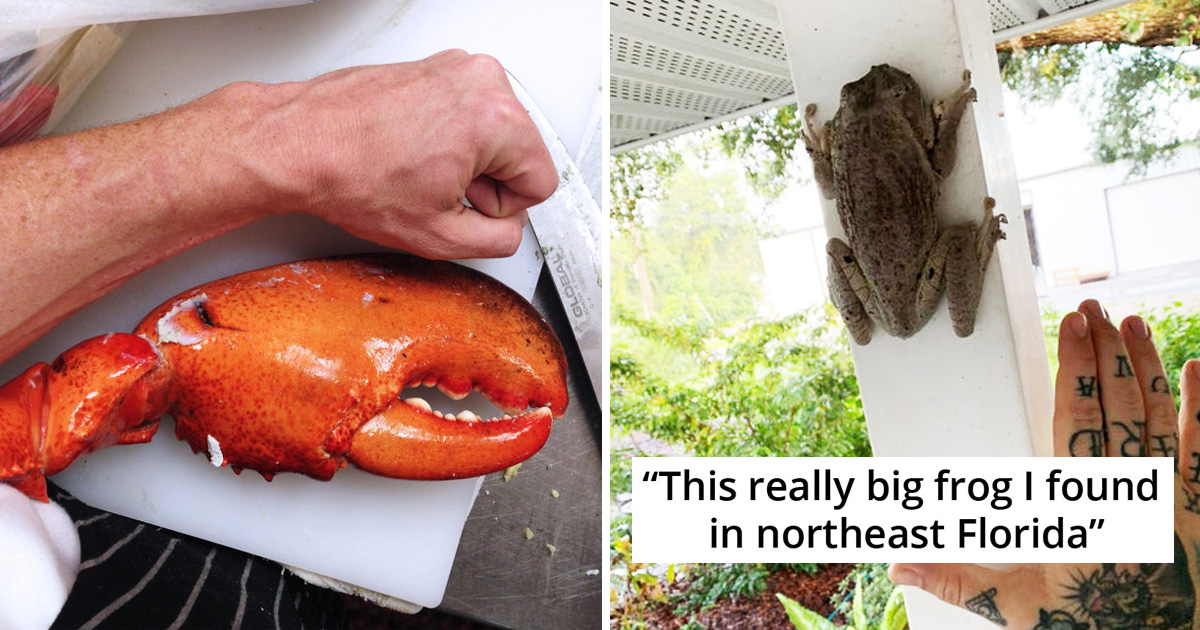 20 Times People Captured Pics Of Surprisingly Huge Things