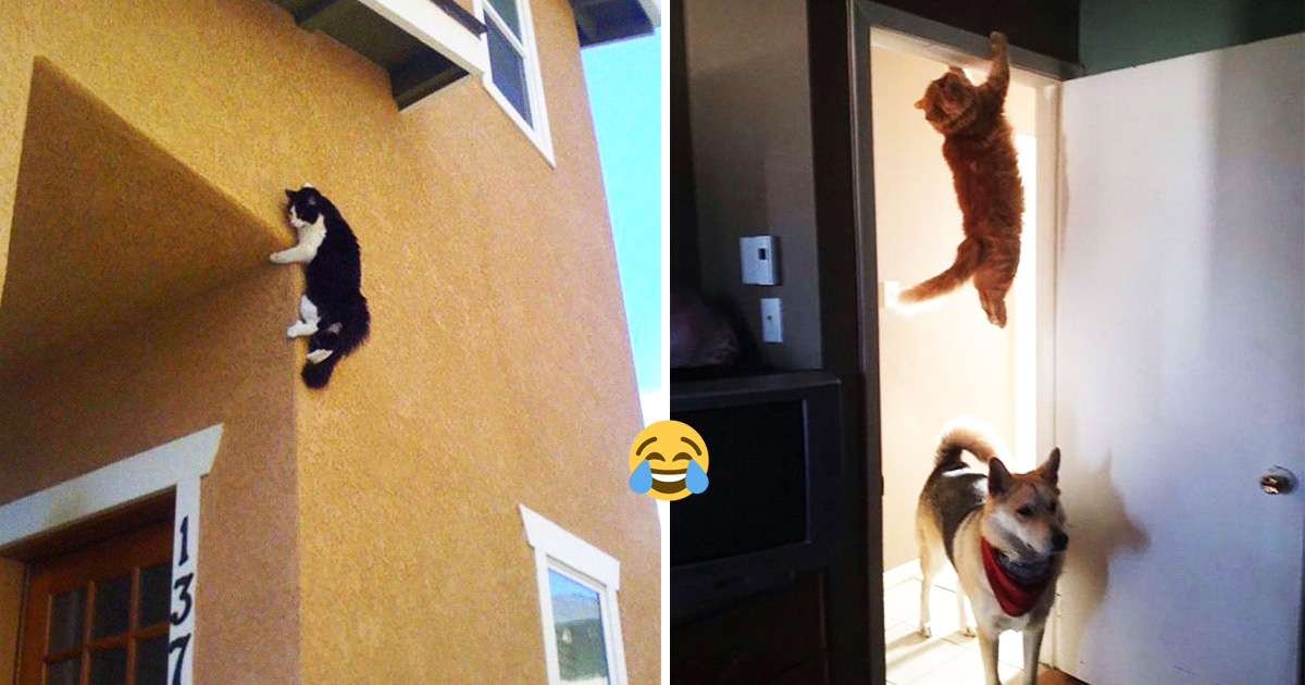 30 Times Cats Hilariously Broke The Laws Of Physics