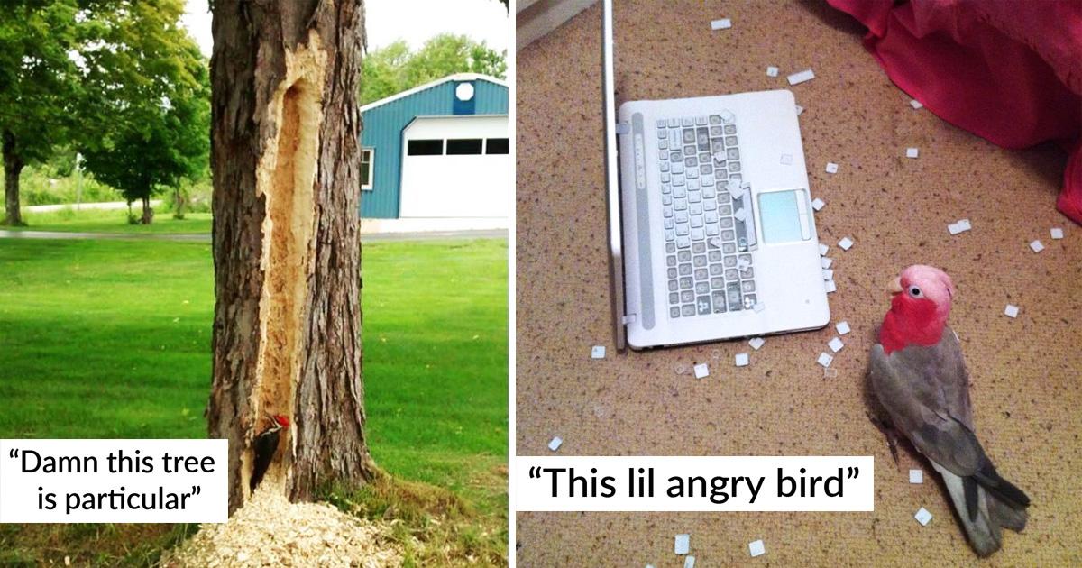 30 Hilarious Birds That Got Shamed For Being Jerk