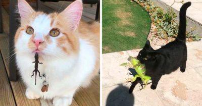 30 People Share Hilarious Moments When Cats Met Lizards