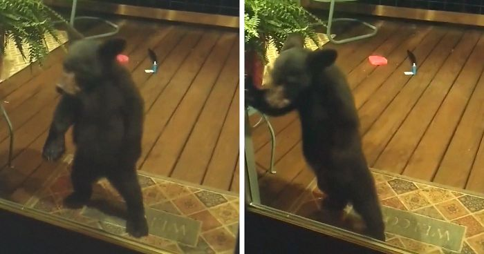 Cub Gets Scolded By Mama Bear After Wandering Into A Human's Porch