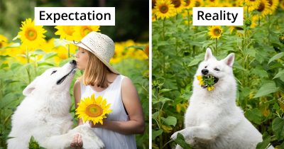 Woman's Photoshoot Of Her 3 Dogs With Sunflowers Goes Wrong When They Realize How Tasty Flowers Are