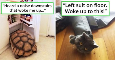 30 Times Pet Owners Woke Up To Hilarious Sights Of Their Pets