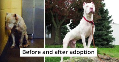 20 Pics Of Dogs Before And After Their Transformative Adoption
