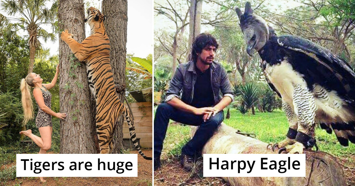 21 Pics Of Things That Are Way Bigger Than Our Expectations