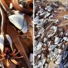 Family On Discover Bizarre 'Alien-Like' Sea Creatures Worth $64K On A Beach