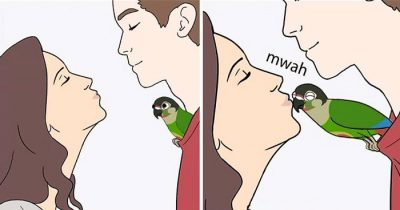 Bird Owner Draws 30 Comics About Parrot And Its Hilarious
