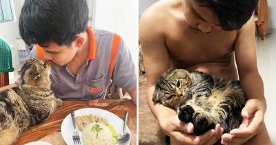 Woman Captures How This Possessive Cat Stole Her Husband In 25 Hilarious Photos