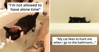 20 Times Cats Hilariously Disrespect Owner's Personal Space