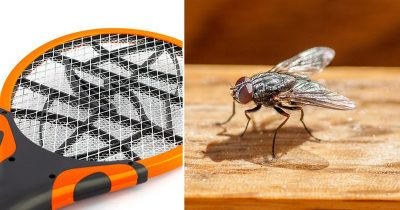 Man Blew Up House In An Attempt To Kill Fly With Electrified Bug Zapper
