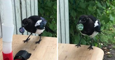 Man Built A Bird Feeder Trading Bottle Caps For Food, And People Love It