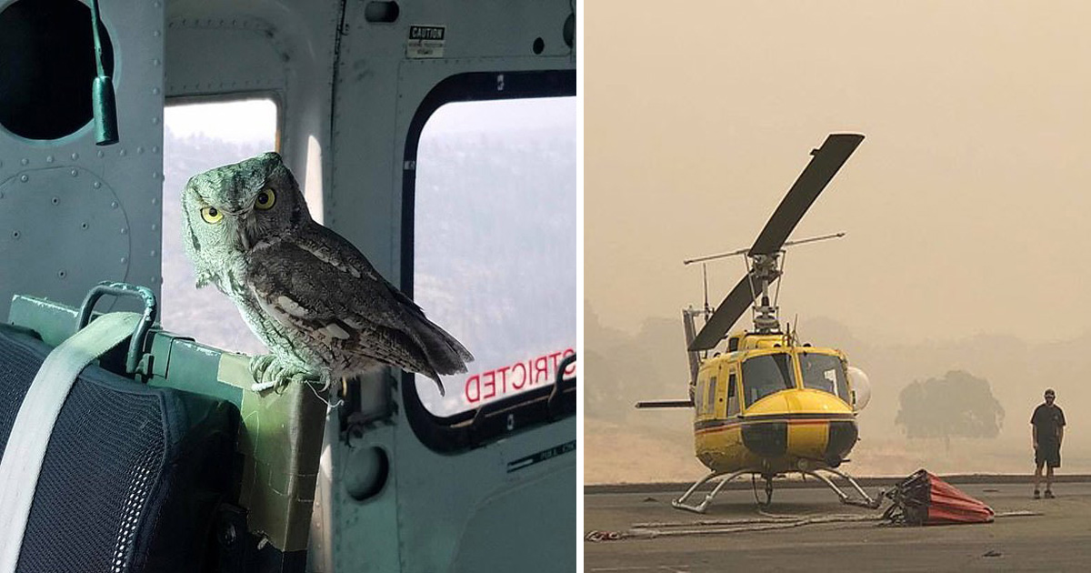 Wild Owl Caught Lift In A Helicopter Mid-Flight To Escape Creek Fire Blaze