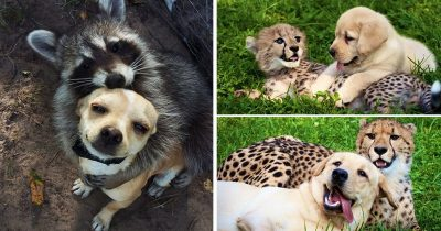 25 Animal Friendships That Will Instantly Make You Happy