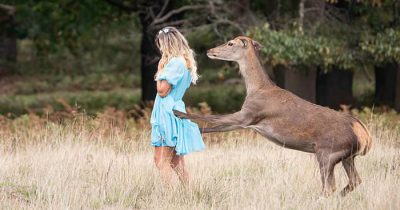 Woman Mauled By Wild Deer In Park After She Tried To Get A Selfie