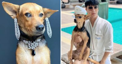 Stray Dog Become An Internet Sensation After A Drunk Man Accidentally Brought Her Home