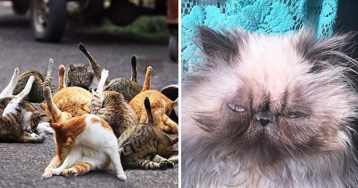 20 Hilarious Cat Pics Contending For 'Unflattering Cat Photo Challenge'