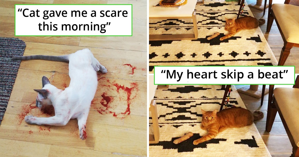 20 Pets That Hilariously Scare Their Owners