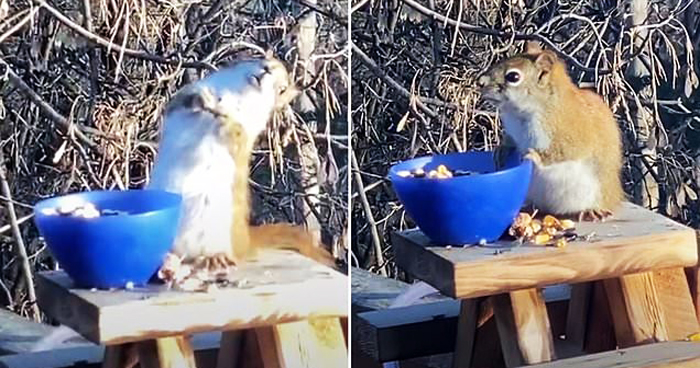 Squirrel Gets Drunk Eating Fermented Pears Left Outside A Minnesota Home