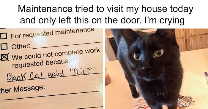 20 Hilarious Pics Prove What A Big Jerk Cats Can Be