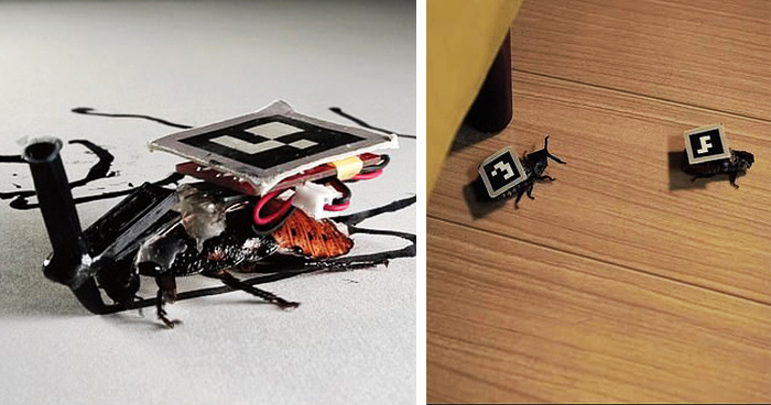 Japanese Researchers Designed Cyborg Cockroaches To Do Small Tasks In Homes